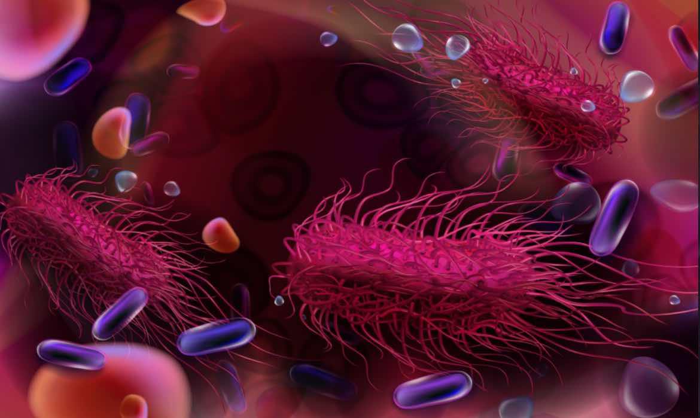 salmonella causa frequente di gastroenteriti