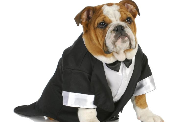Vestiti per il cane-Spesso non gli piace-SoloNotizie24.it